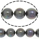Detit të Jugut Beads Shell, Jug Deti Shell, Round, asnjë, 12mm, : 0.5mm, :16Inç, 32PC/Fije floku,  16Inç,