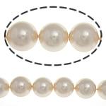 Detit të Jugut Beads Shell, Jug Deti Shell, Round, asnjë, 14mm, : 1mm, :15.5Inç, 28PC/Fije floku,  15.5Inç,