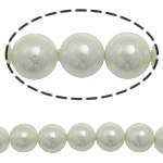 Detit të Jugut Beads Shell, Jug Deti Shell, Round, asnjë, e bardhë, 12mm, : 0.5mm, :16Inç, 33PC/Fije floku,  16Inç,