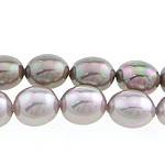 Detit të Jugut Beads Shell, Jug Deti Shell, Oval, asnjë, ngjyra të përziera, 13x15mm, : 0.8mm, : 16Inç, 2Fillesat/Qese,  Qese