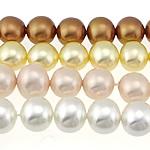 Detit të Jugut Beads Shell, Jug Deti Shell, Round, asnjë, ngjyra të përziera, 13x15mm, : 0.8mm, : 16Inç, 2Fillesat/Qese,  Qese