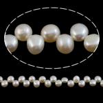 Monedhë Beads ujërave të ëmbla kulturuar Pearl, Pearl kulturuar ujërave të ëmbla, 7-8mm, : 1mm, :15Inç,  15Inç,