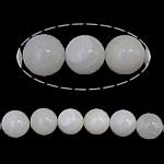 Beads Giant molusqe, Melodik Giant, Round, sintetik, i tejdukshëm, e bardhë, 8mm, : 1mm, : 16Inç, 10Fillesat/Shumë,  Shumë
