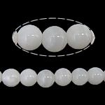 Beads Giant molusqe, Melodik Giant, Round, sintetik, i tejdukshëm, e bardhë, 14mm, : 1mm, : 15Inç, 10Fillesat/Shumë,  Shumë