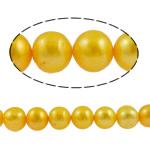 Barok Beads kulturuar Pearl ujërave të ëmbla, Pearl kulturuar ujërave të ëmbla, Round, i lyer, i verdhë, 11-12mm, : 1mm, :15.7Inç,  15.7Inç,