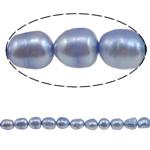 Barok Beads kulturuar Pearl ujërave të ëmbla, Pearl kulturuar ujërave të ëmbla, i lyer, vjollcë, 8-9mm, : 1mm, :15.7Inç,  15.7Inç,