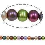Barok Beads kulturuar Pearl ujërave të ëmbla, Pearl kulturuar ujërave të ëmbla, Round, i lyer, ngjyra të përziera, 8-9mm, : 1mm, :15.7Inç,  15.7Inç,