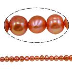 Barok Beads kulturuar Pearl ujërave të ëmbla, Pearl kulturuar ujërave të ëmbla, i lyer, rozë, 5-6mm, : 1mm, :15.4Inç,  15.4Inç,