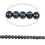 Barok Beads kulturuar Pearl ujërave të ëmbla, Pearl kulturuar ujërave të ëmbla, Round, asnjë, e zezë, 7-8mm, : 0.8mm, : 15Inç,  15Inç,