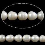Rajs Beads ujërave të ëmbla kulturuar Pearl, Pearl kulturuar ujërave të ëmbla, Oriz, asnjë, e bardhë, AA, 12-13mm, : 0.8mm, : 15.7Inç,  15.7Inç,