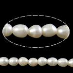 Rajs Beads ujërave të ëmbla kulturuar Pearl, Pearl kulturuar ujërave të ëmbla, Oriz, asnjë, e bardhë, Një, 8-9mm, : 2.5mm, :14.7Inç,  14.7Inç,