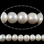 Barok Beads kulturuar Pearl ujërave të ëmbla, Pearl kulturuar ujërave të ëmbla, Round, asnjë, e bardhë, 11-12mm, : 3mm, :15.3Inç,  15.3Inç,
