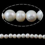 Barok Beads kulturuar Pearl ujërave të ëmbla, Pearl kulturuar ujërave të ëmbla, Round, natyror, e bardhë, 8-9mm, : 2mm, :15Inç,  15Inç,