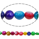 Beads Natyrore Colored Shell, Predhë, Nuggets, i lyer, asnjë, ngjyra të përziera, 7-8mm, : 1mm, : 15Inç, 10Fillesat/Qese,  Qese