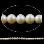 Round Beads kulturuar Pearl ujërave të ëmbla, Pearl kulturuar ujërave të ëmbla, natyror, e bardhë, Një, 8-9mm, : 1mm, :14.3Inç,  14.3Inç,