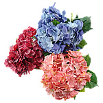 Lule artificiale Kryesore Dekor, Plastik, asnjë, asnjë, ngjyra të përziera, 400x450x310mm, 10PC/Shumë,  Shumë