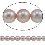 Round Beads kulturuar Pearl ujërave të ëmbla, Pearl kulturuar ujërave të ëmbla, natyror, vjollcë, AAA, 9-10mn, : 0.8mm, : 15.7Inç,  15.7Inç,