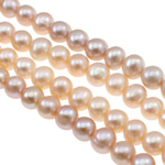 Button Beads ujërave të ëmbla kulturuar Pearl, Pearl kulturuar ujërave të ëmbla, Buton, natyror, ngjyra të përziera, 8-9mm, : 0.8-1mm, : 15.3Inç,  15.3Inç,