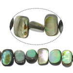 Beads predhë guaskë, Shell Guaskë, Drejtkëndësh, asnjë, asnjë, asnjë, 5-7x8-9x2.5-4mm, : 1mm, :16Inç, 5Fillesat/Shumë,  Shumë