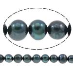 Patates Beads ujërave të ëmbla kulturuar Pearl, Pearl kulturuar ujërave të ëmbla, i lyer, blu e zezë, 8-9mm, : 0.8mm, : 14.5Inç,  14.5Inç,