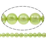 Patates Beads ujërave të ëmbla kulturuar Pearl, Pearl kulturuar ujërave të ëmbla, i lyer, drita e gjelbër, 10-11mm, : 0.8mm, : 14.5Inç,  14.5Inç,
