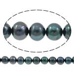Patates Beads ujërave të ëmbla kulturuar Pearl, Pearl kulturuar ujërave të ëmbla, i lyer, blu e zezë, 10-11mm, : 0.8mm, : 14.5Inç,  14.5Inç,