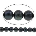 Round Beads kulturuar Pearl ujërave të ëmbla, Pearl kulturuar ujërave të ëmbla, natyror, e zezë, 12-13mm, : 0.8mm, : 15.7Inç,  15.7Inç,