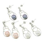 Një palë vathë Pearl ujërave të ëmbla, Pearl kulturuar ujërave të ëmbla, with Tunxh, Shape Tjera, ngjyrë platin praruar, ngjyra të përziera, 14x33mm, 22x14x3.5cm, 36Çiftet/Kuti,  Kuti