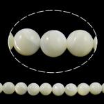 Beads Natyrore Deti Shell, Round, natyror, asnjë, e bardhë, Një, 8mm, : 0.8mm, : 15.3Inç, 10Fillesat/Shumë, approx48pcs/strand,  Shumë