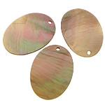 Pendants Shell, Deti Shell, Oval Flat, asnjë, asnjë, asnjë, 18x25x1mm, : 1mm, 100PC/Shumë,  Shumë