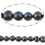 Barok Beads kulturuar Pearl ujërave të ëmbla, Pearl kulturuar ujërave të ëmbla, Round, asnjë, e zezë, 8-9mm, : 0.8mm, : 14.7Inç,  14.7Inç,