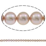 Round Beads kulturuar Pearl ujërave të ëmbla, Pearl kulturuar ujërave të ëmbla, natyror, asnjë, vjollcë, AAA, 7-8mm, : 1mm, :15.7Inç,  15.7Inç,