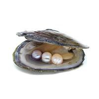 Süßwasser kultivierte Liebe wünschen Perlenaustern, Perlen, keine, 10-11mm, verkauft von PC