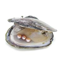 Süßwasser kultivierte Liebe wünschen Perlenaustern, Perlen, keine, 7-8mm, verkauft von PC