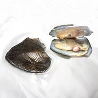 Süßwasser kultivierte Liebe wünschen Perlenaustern, Perlen, verkauft von PC