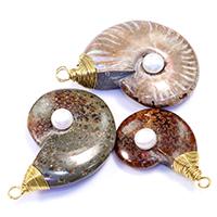 Ammonit fossile Edelstein Anhänger, mit Natürliche kultivierte Süßwasserperlen & Messing, goldfarben plattiert, natürliche & gemischt, 30-43x45-60x13-15mm, Bohrung:ca. 4mm, 5PCs/Menge, verkauft von Menge