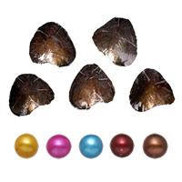 Süßwasser kultivierte Liebe wünschen Perlenaustern, Perlen, Kartoffel, gemischte Farben, 7-8mm, 5PCs/Menge, verkauft von Menge