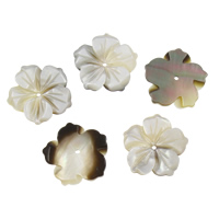 Schwarze Muschelperlen, Blume, 20x2mm, Bohrung:ca. 2mm, 50PCs/Tasche, verkauft von Tasche