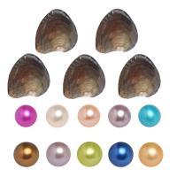 Oyster & amp; Wunsch Perlen-Kit, Natürliche kultivierte Süßwasserperlen, Kartoffel, gemischte Farben, 6-7mm, 10PCs/Tasche, verkauft von Tasche